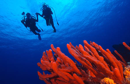 PADI Scuba Dive Course on Our Honeymoon